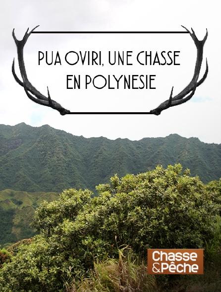 Chasse et pêche - Pua oviri, une chasse en Polynésie