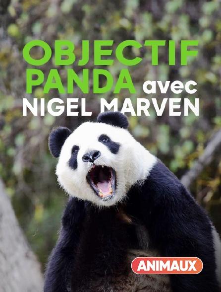 Animaux - Objectif panda avec Nigel Marven
