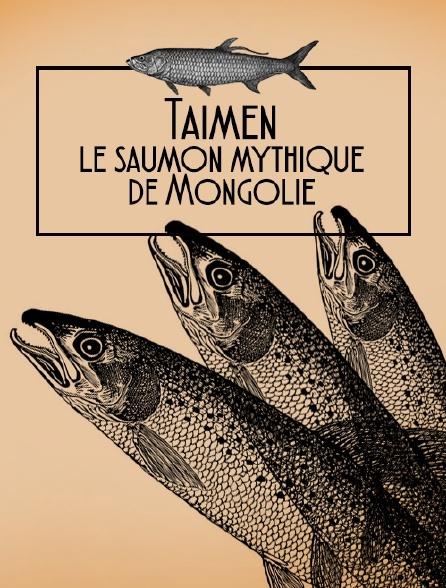 Taïmen, le saumon mythique de Mongolie