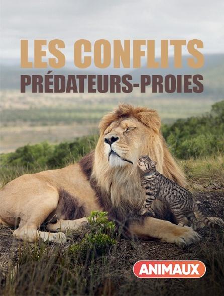 Animaux - Les conflits prédateurs-proies