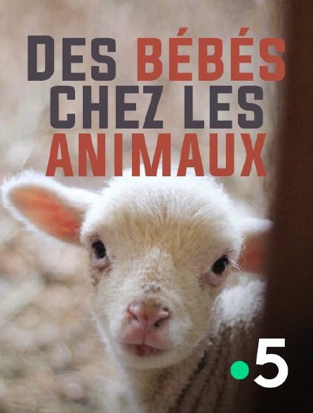 France 5 - Des bébés chez les animaux
