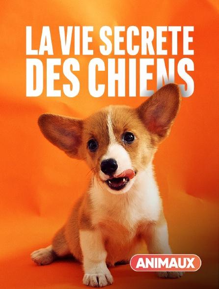 Animaux - La vie secrète des chiens