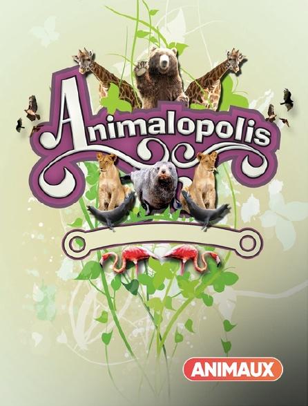 Animaux - Animalopolis