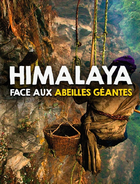 Himalaya - Face aux abeilles géantes Jpg