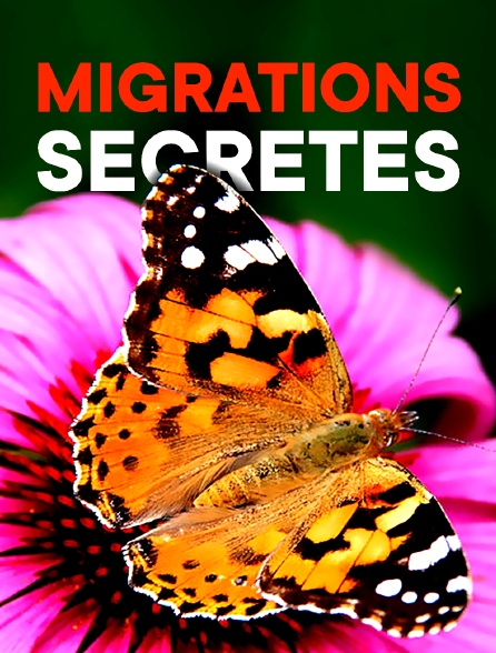 Migrations secrètes