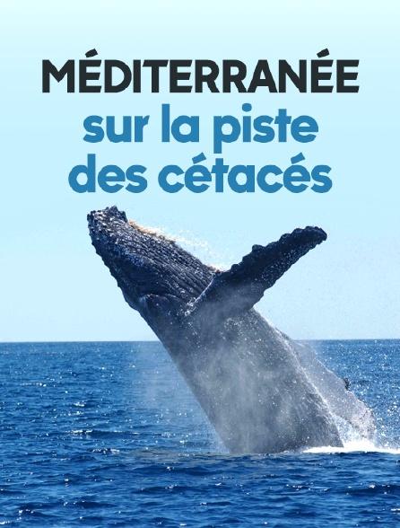 Méditerranée, sur la piste des cétacés
