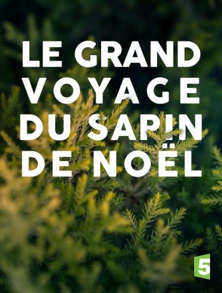 France 5 - Le grand voyage du sapin de Noël